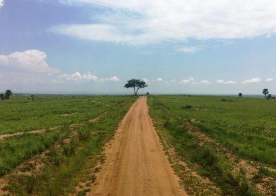 La inmensa sabana. Uganda 2017
