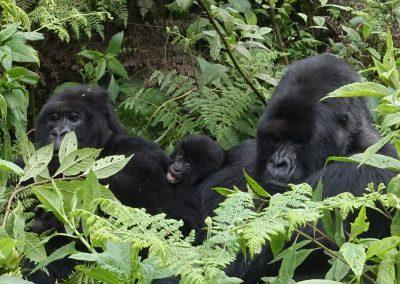 Montes Virunga. Ruanda 2017