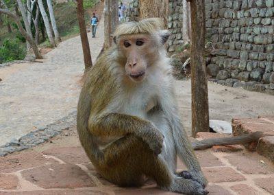 Mono flequillo