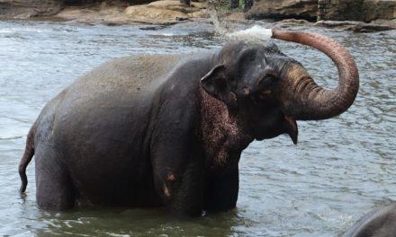 Sri Lanka. Una lágrima con profundas huellas