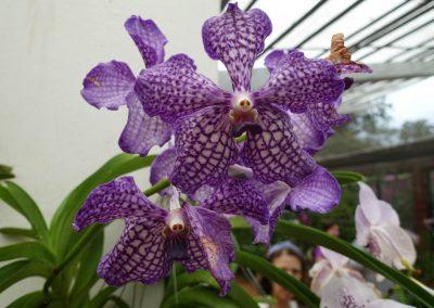 Flores del Botánico