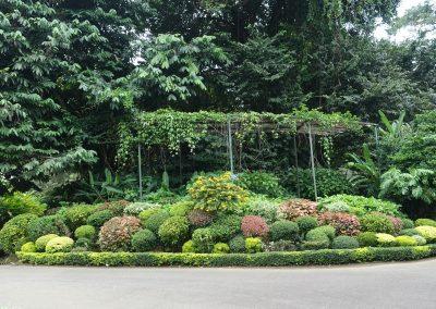Botánico