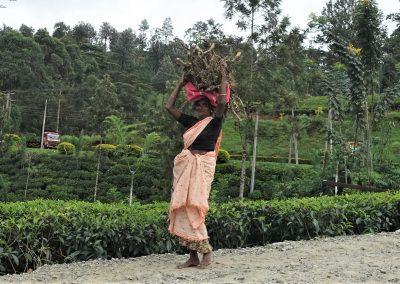 Mujer tamil