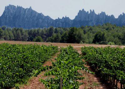 Montserrat y los viñedos