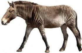 Equus stenonis